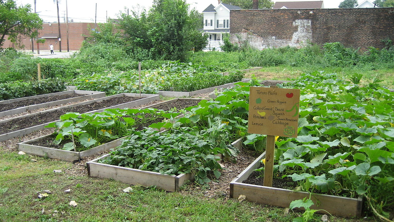 The neighbourhood has several green-spaces, including its own community garden (Image Credit: Jeff Schuler, Wikimedia)