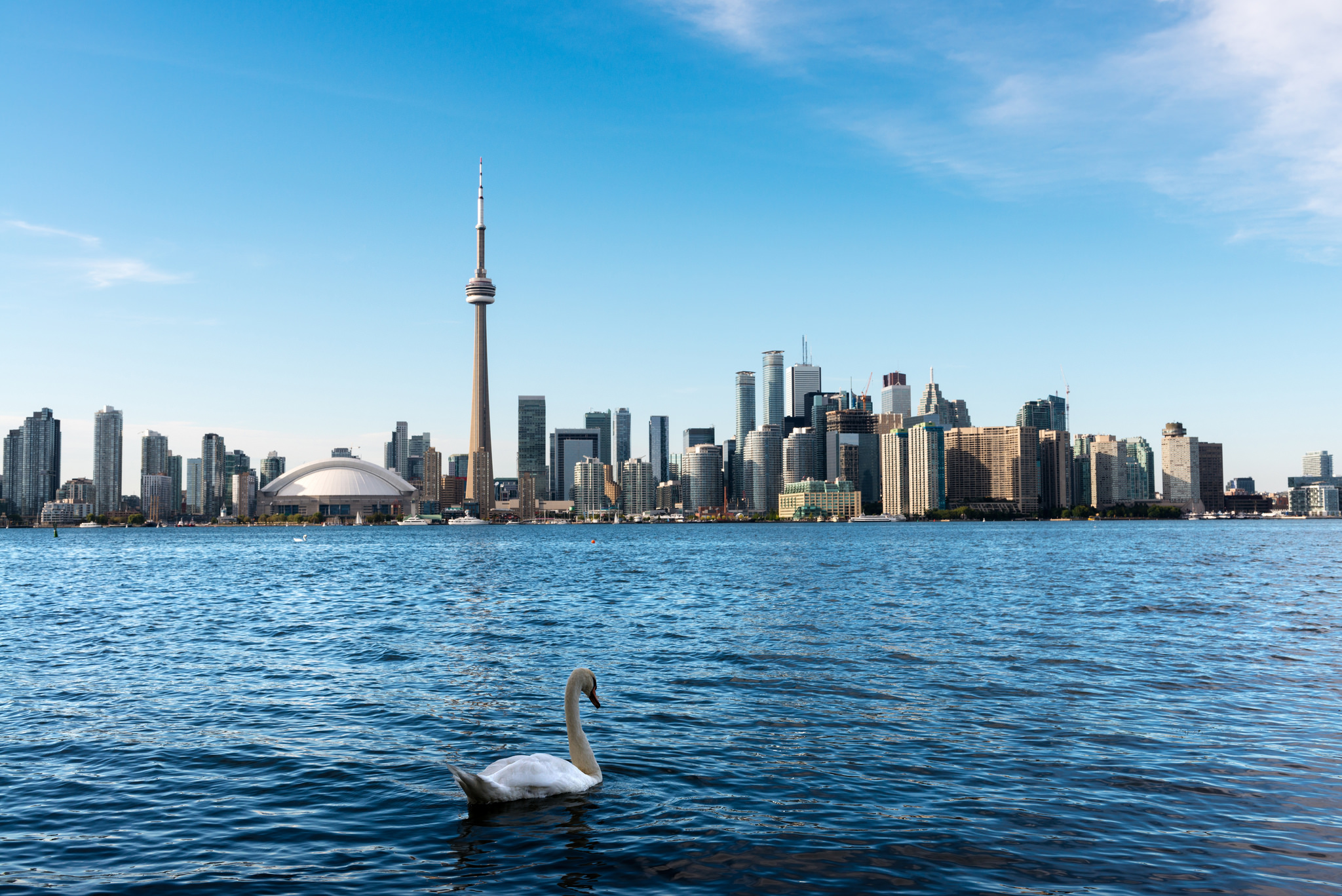 Photo of Toronto Waterfront and Lake Ontario. There is also a beautiful swan on the lake.