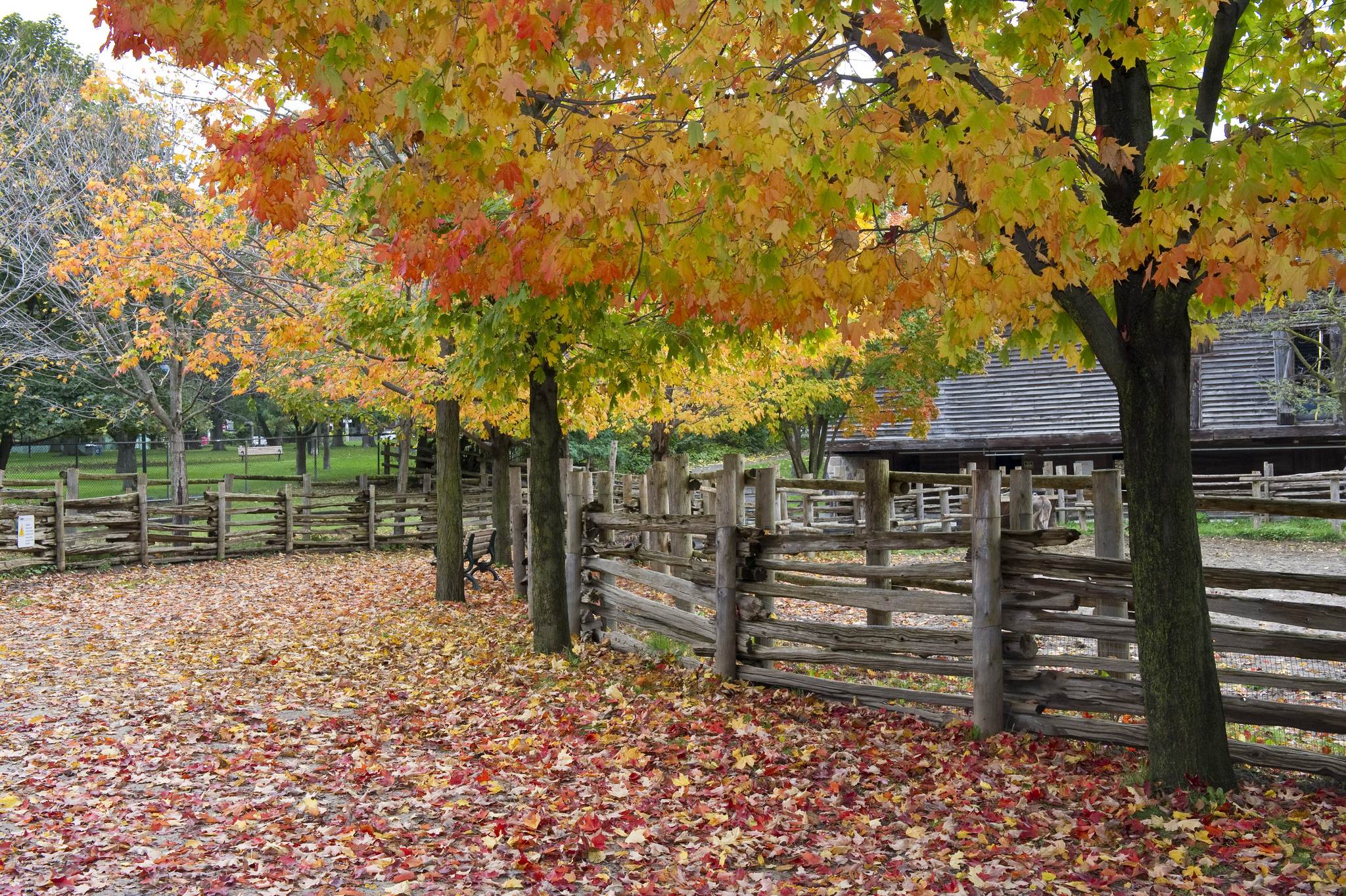 Another image of nature, this one of Riverdale Farm.