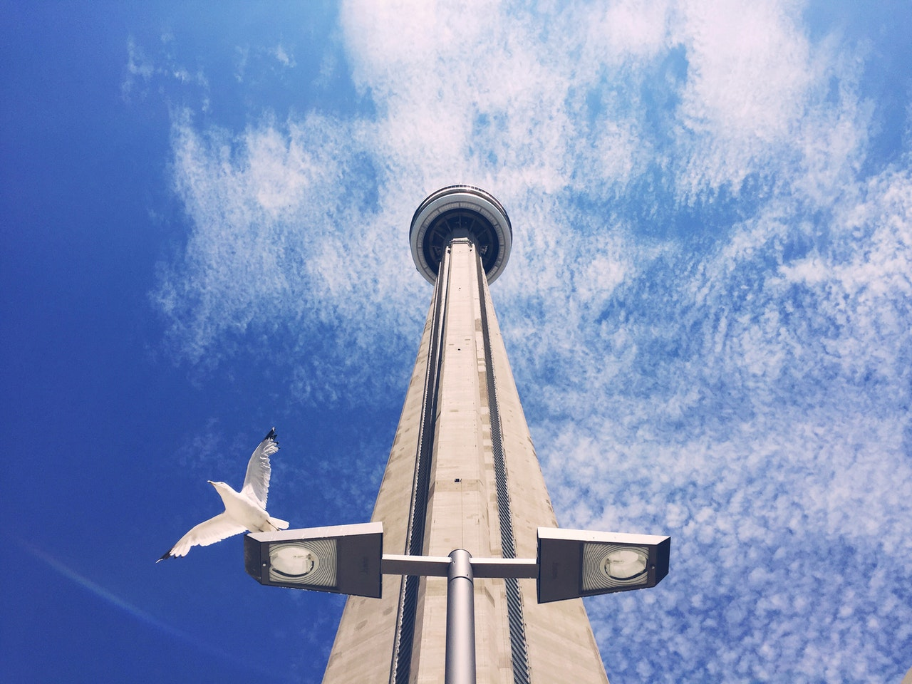 CN Tower and bird on lamp
