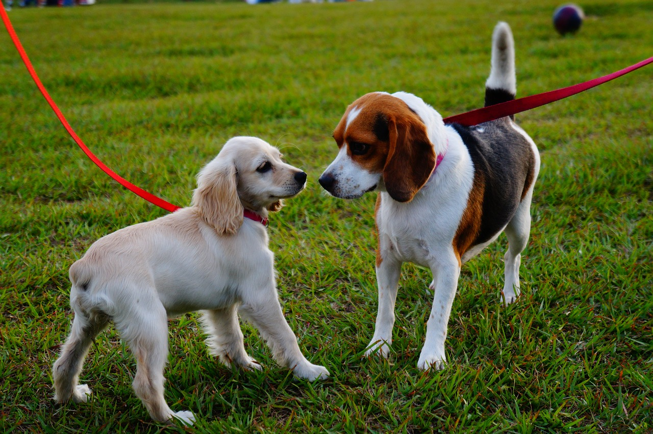 Photo of 2 dogs meeting in park.