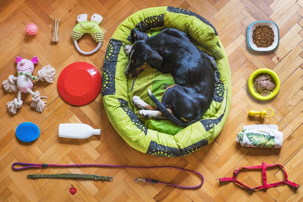 Black dog in dog bed surrounded by toys, leashes and dog food.