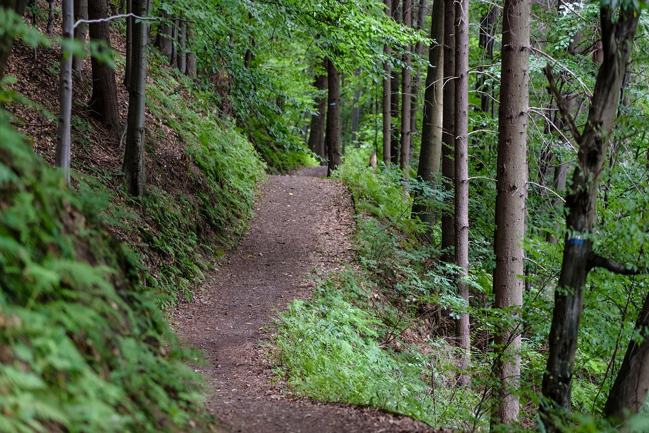 Scenic hiking and biking trail in forest.